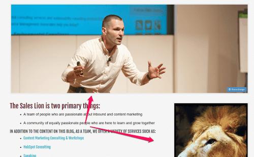 Meet The Sales Lion